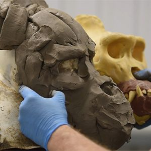 SC003 Sculpting a Mountain Gorilla in WED Clay for an Animatronic Mask