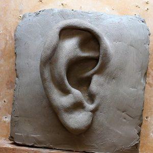 Anatomy Sculpture - The Ear
